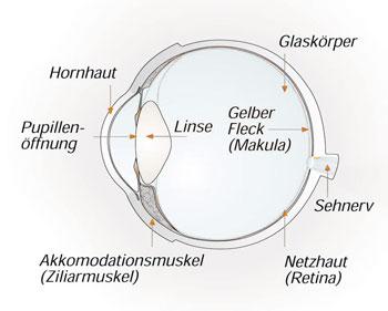 Das menschliche Auge - Hornhaut, Augenlinse, Sehnerv... Optik Sagawe
