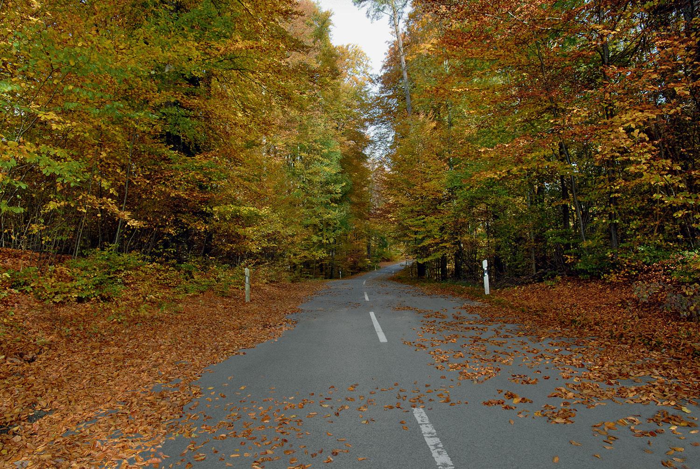 Herbstszene mit Zeiss i.Scription